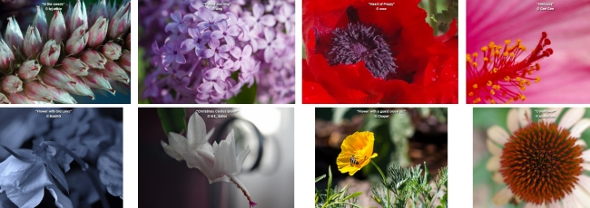 """Flowers Up Close"" Photo Contest Nominations"