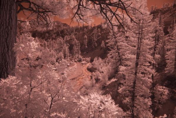 Original IR Photo
