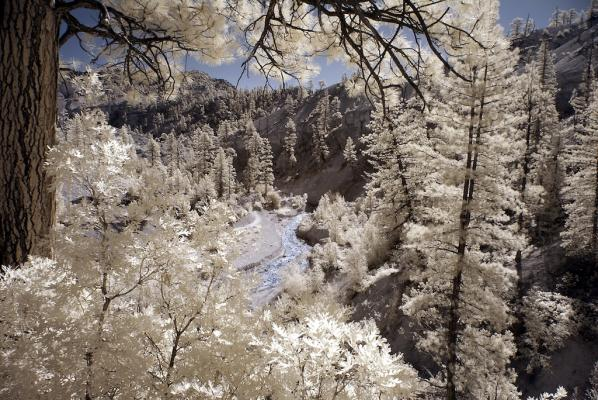 "The Making of ""Mossy Cave Trail in Infrared"""