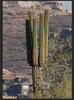Cactus Selection