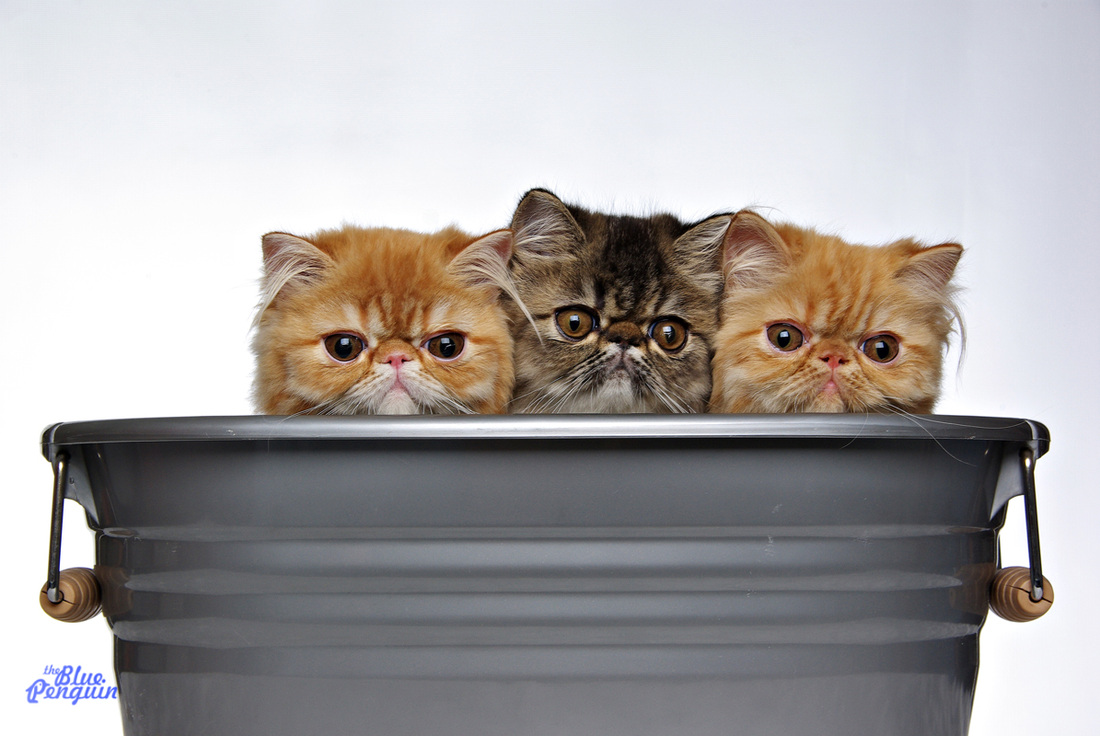 Kittens in bucket