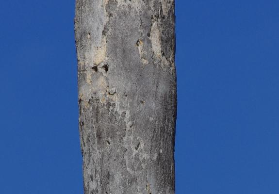 Palm tree cropped