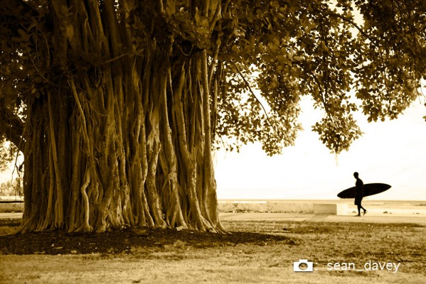 """Banyon Surfer""      A random surfer passing by a huge banyon tree in Honolulu."