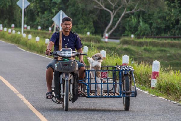 Dog In Scooter, Thailand, 2013