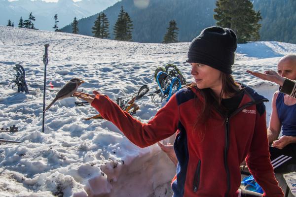 Bird Feeding, Garibaldi Park BC, 2014