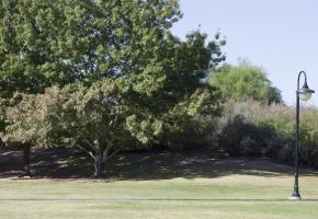 Tree iis F13