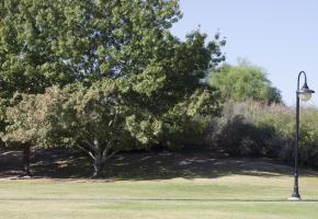 Tree K-5 F13