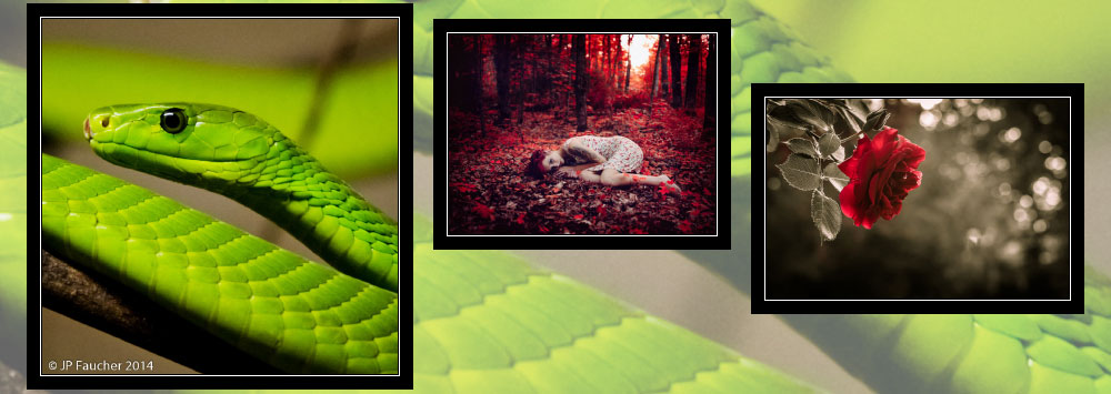"""""""Dominant Color"""" Photo Contest Winners"""