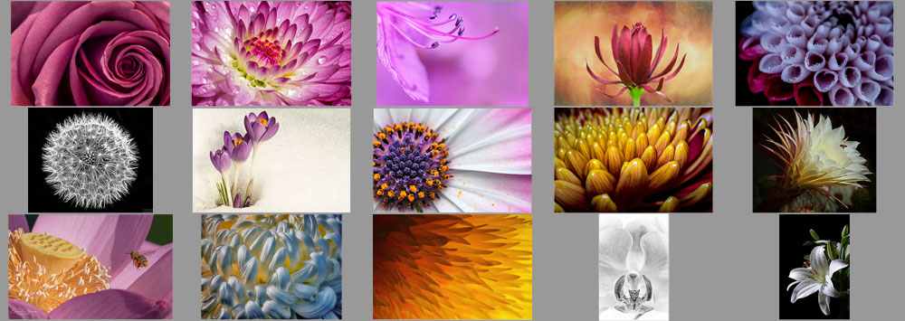 "December ""Flowers Up Close"" Contest Finalists Announced"