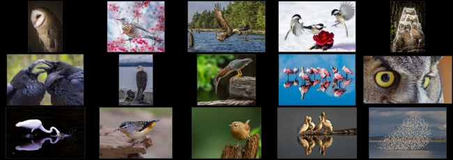 "March ""Birds"" Contest Finalists Announced"