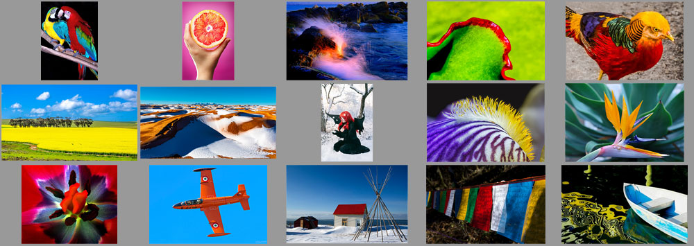 "January ""Contrasting Colors"" Contest Finalists Announced"