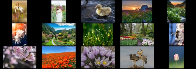 "April ""Springtime"" Contest Finalists Announced"