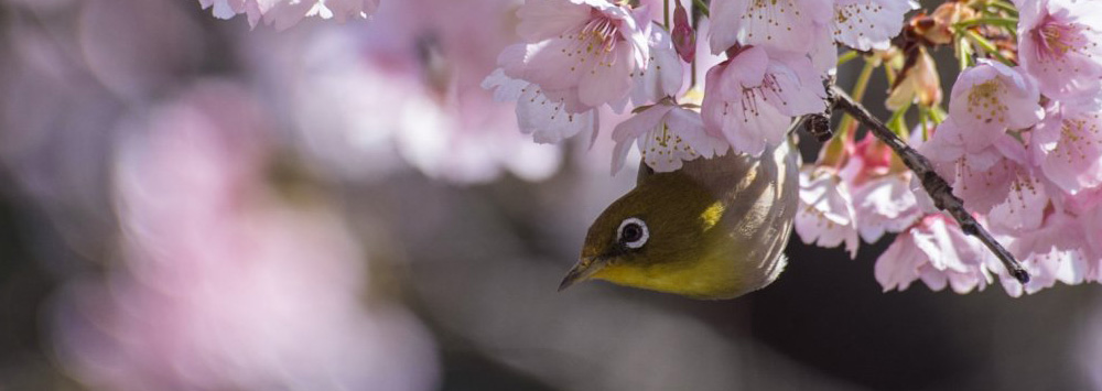 """The Making of """"Bird in Ueno Park"""""""