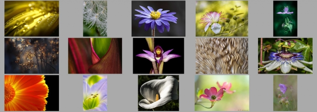 "June ""Macro - Flowers and Plants"" Contest Finalists Announced"