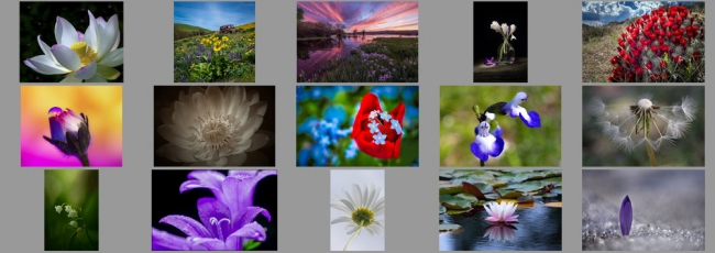"May ""Flowers"" Contest Finalists Announced"
