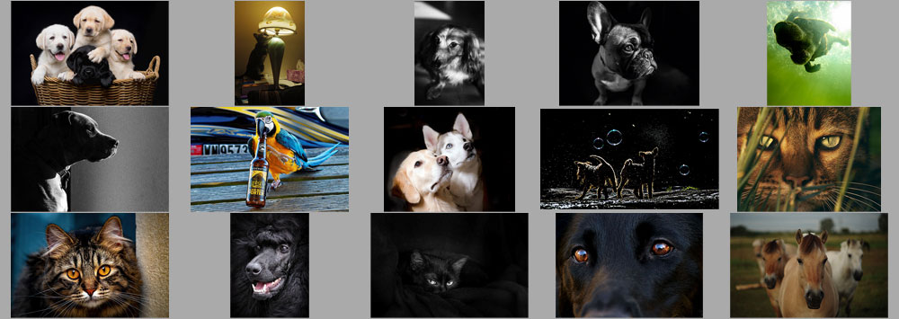 """September """"Pets"""" Contest Finalists Announced"""
