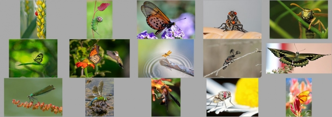"""October """"Insects"""" Contest Finalists Announced"""