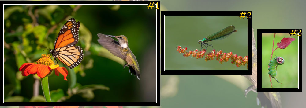 "October 2020 ""Insects"" Photo Contest Winners"