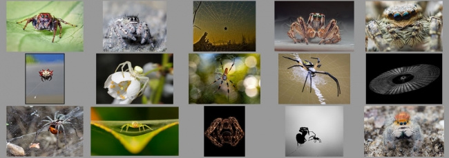 """July """"Spiders"""" Contest Finalists Announced"""