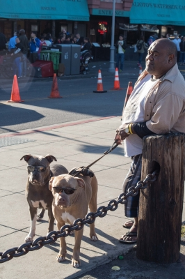 Cool dogs and their owner, Fisherman's Wharf, San Francisco, CA, USA