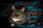 "Cat on Quilt  ƒ2.0 1/50"" 800 ISO"