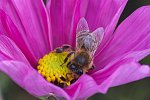 Probing for nectar