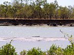 Crocodile basking on the Albert River, Burketown Queensland. The crocodile is about 2.7m (9 feet) long. Enough to be a problem if you went swimming....