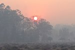 The sun rising through smoke at Mosquito Creek, 8 December 2019.