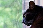 Shanequa looks out window screen