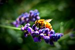 Vibrant Nature:  Taking this photo is what made me fall in love with macro photography. It certainly isn't the sharpest and I brought out the color a...
