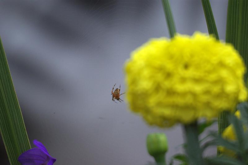 Name:  1000mm 3.jpg Views: 1315 Size:  27.2 KB