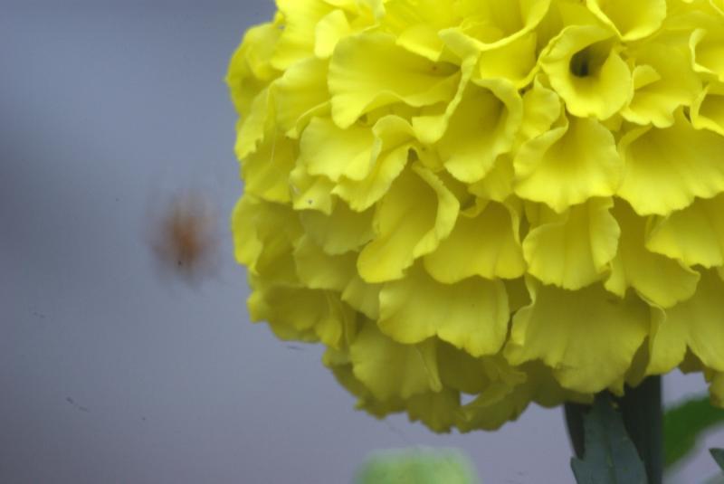 Name:  1000mm 7.jpg Views: 1357 Size:  28.5 KB