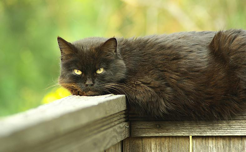 Name:  Mr Kitty.jpg Views: 152 Size:  50.4 KB