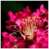 -pink-flower-1-web.jpg
