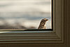 -little-bird-visitor-2.jpg
