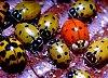 -ladybugs-1.jpg