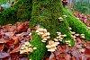 -woodland-floor.jpg