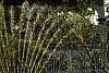 -backlit-garden-sprinkler.jpg