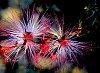 -fireworks.jpg