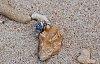 -hermit-crab-1.jpg