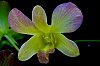 -orchids-3.jpg