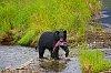 -bear-salmon.jpg