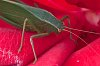 -leaf-insect-1.jpg