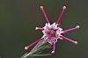 -wild-flower.jpg