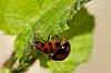 -ladybird.jpg