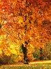 -tree-eden_romansolar.jpg