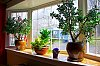 -jade-plant.jpg