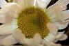 -flower2.jpg