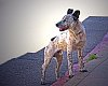 -street_dog-light-1280.jpg
