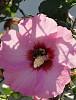 -bees-068-4-.jpg